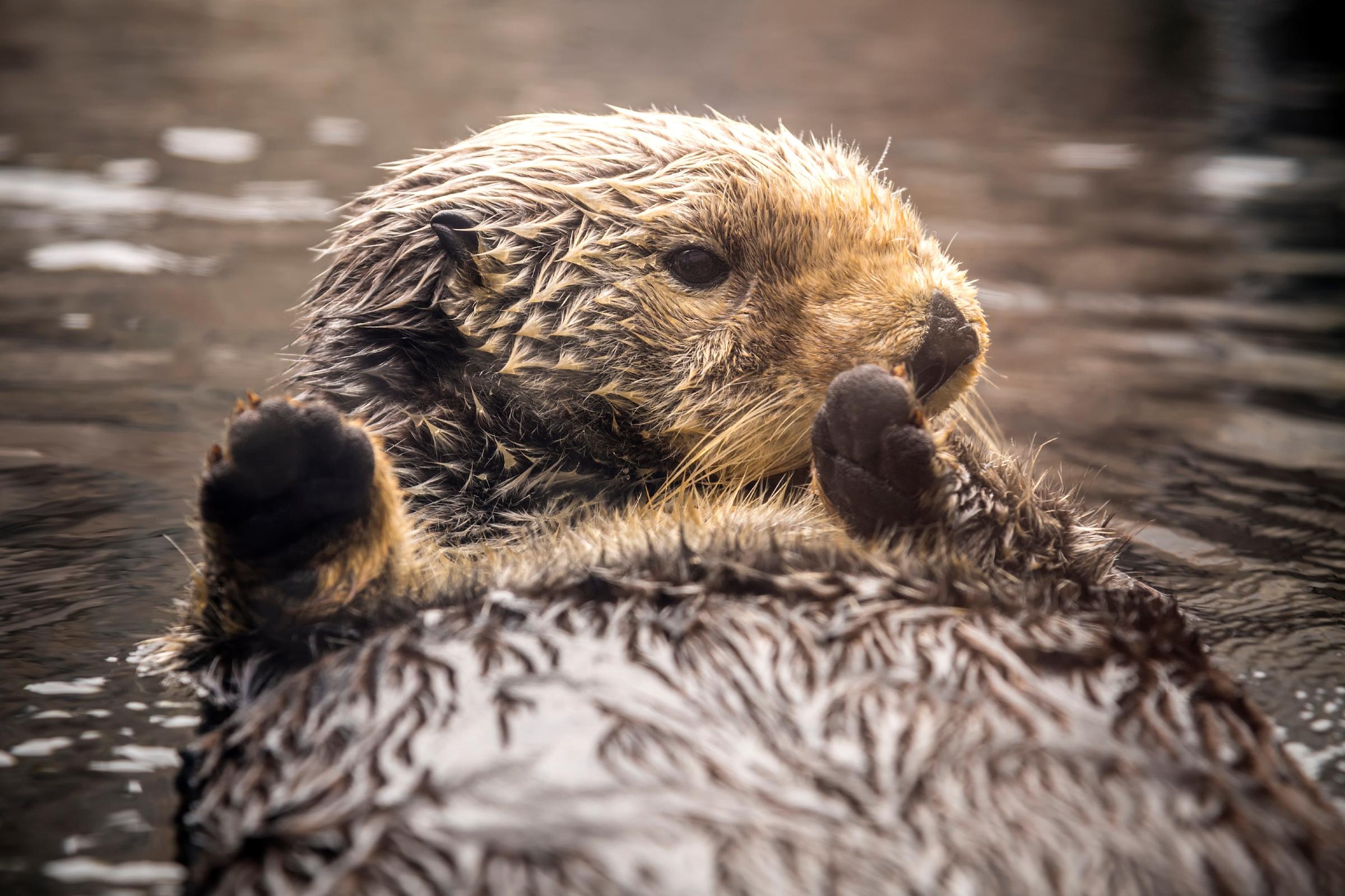 Animals A To Z Monterey Bay Aquarium
